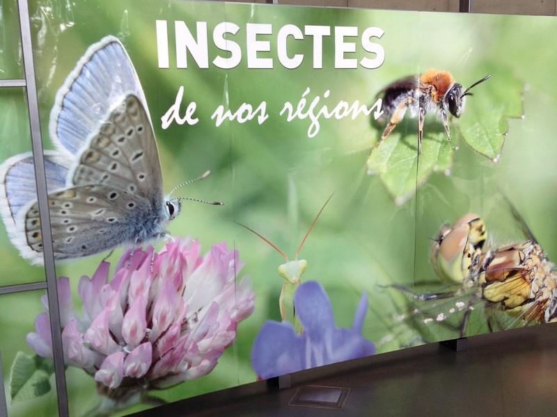 Affiche de présentation de l'exposition