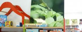 Expositions insectes aux Espaces Ludiques Isséens