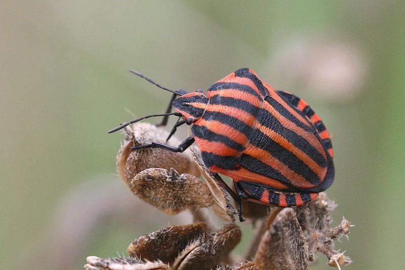 Comment les reconna tre insectes de france - Reconnaitre les insectes xylophages ...