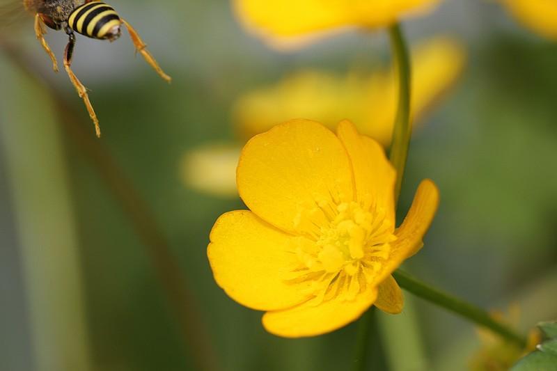 Les insectes bougent beaucoup, ce n'est pas toujours évident !