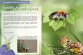 Insectes de nos régions | ©Fabien Virey