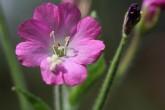 Sortie botanique