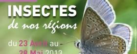 Insectes de nos régions 2013 | ©